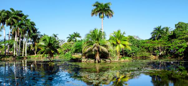 NATURALEZA EN CUBA: Parque Nacional Montemar y la península de Zapata