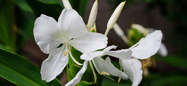 DATOS SOBRE CUBA: El descubrimiento del perfume de CUBA